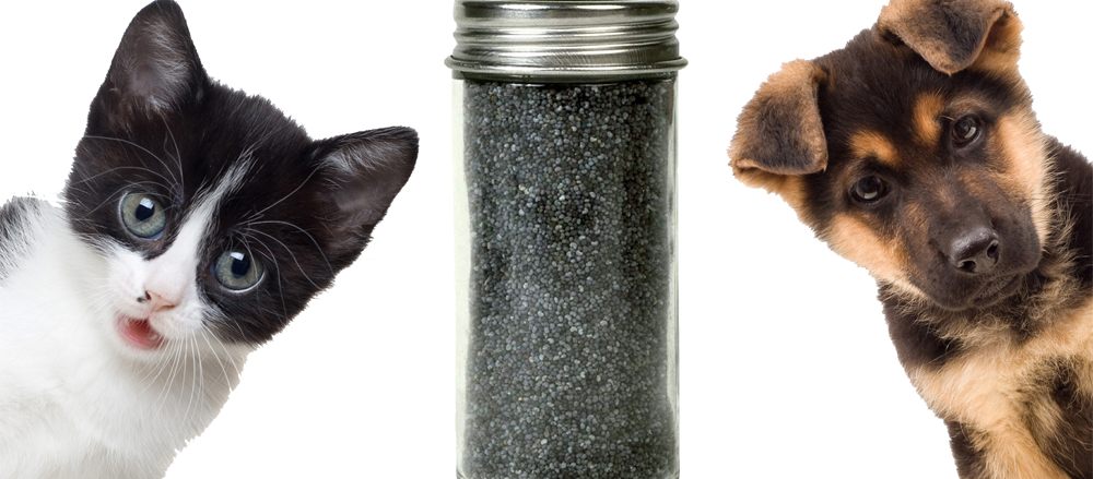 chia-seeds-for-pets