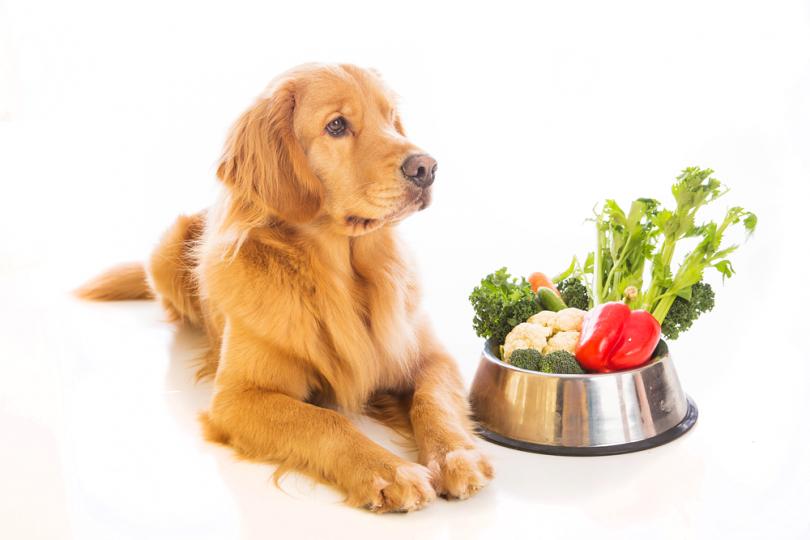 vegetarian enzymes