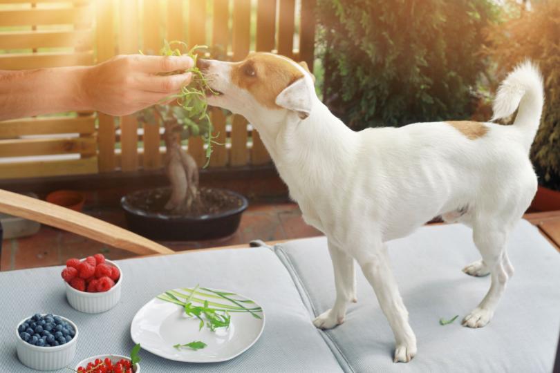 natural dog digestion
