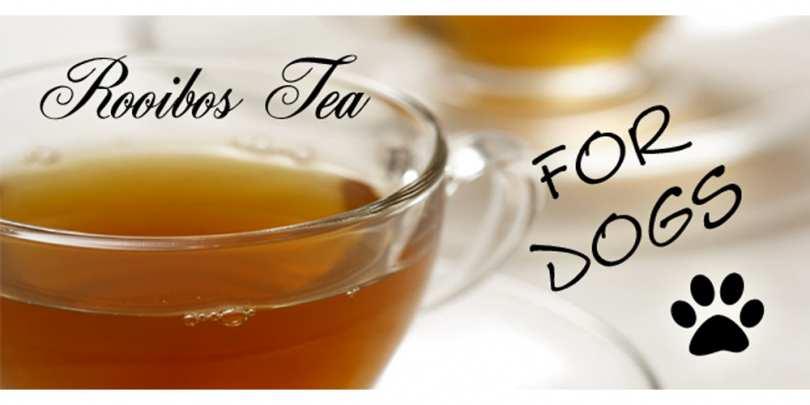 rooibos tea for dogs